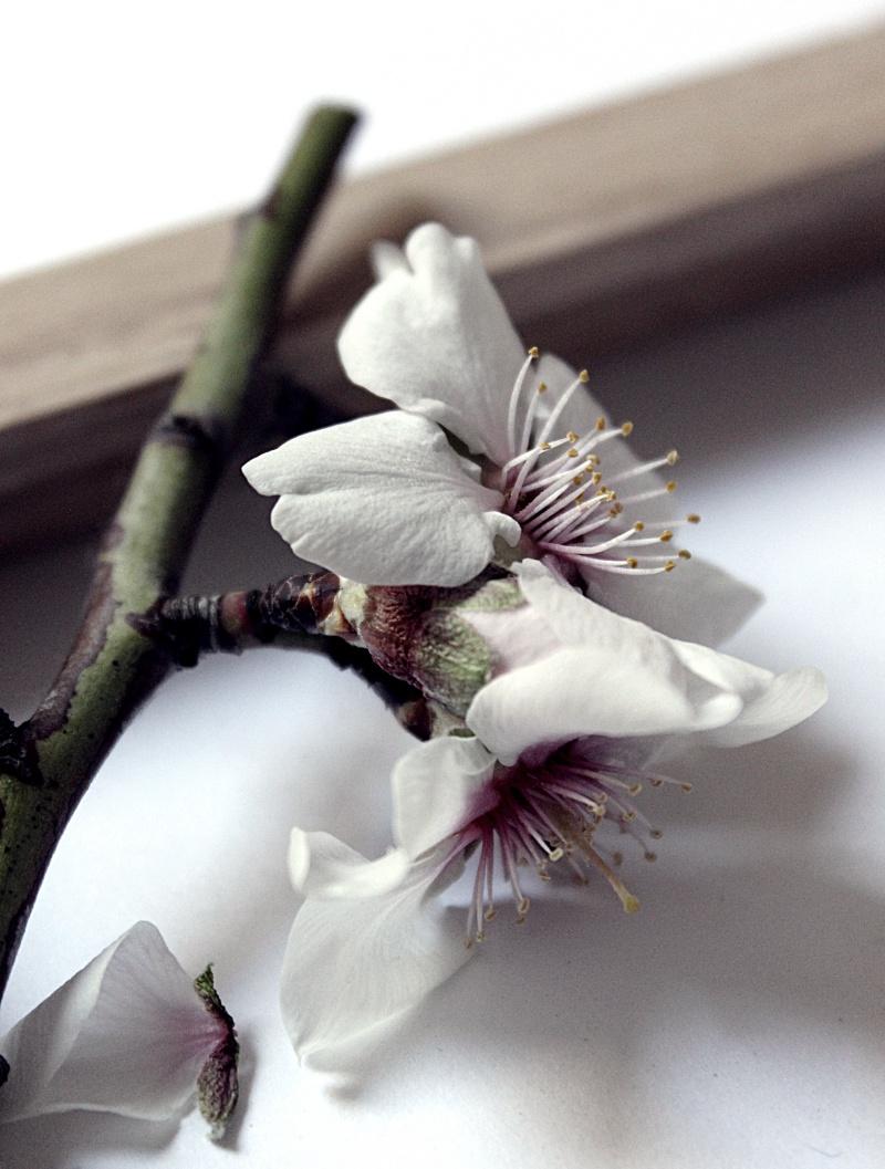 Madera y Flores 9