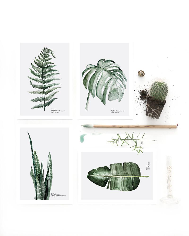 Postales Botánica